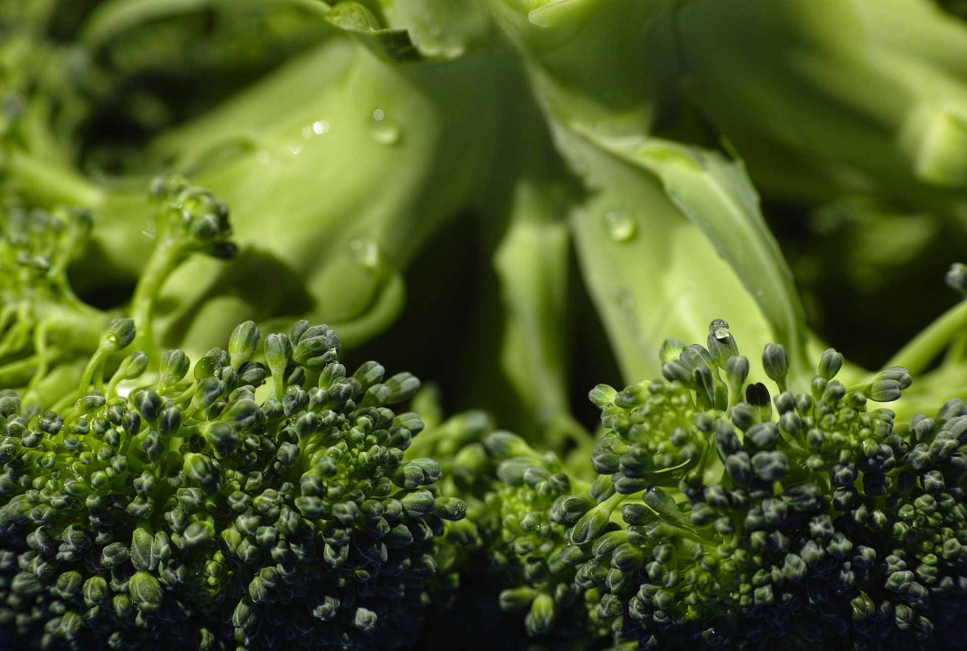 What to eat when you're trying to get pregnant - leafty greens and broccoli which contain follate