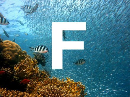 A-Z of pregnancy and nutrition: F is for…
