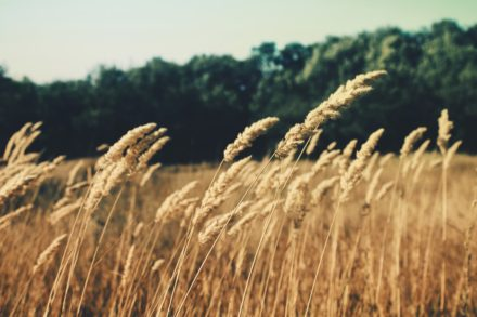 What are whole grain foods and why are they so good for you?