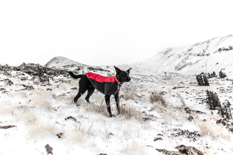 How to take care of your dog during the winter months