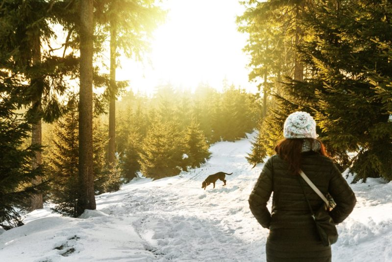 Healthy snacks to pack for your winter dog walk