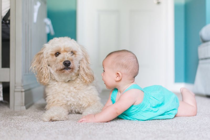 5 tips for introducing your dog to your baby