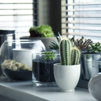 Which houseplants are best for keeping your home fresh, clean and healthy?