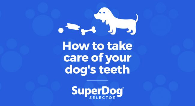 How To Take Care Of Your Dog S Teeth