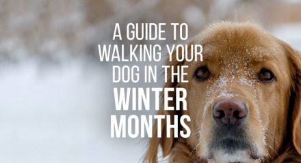 The complete guide to keeping your dog active, healthy and happy in the winter months