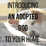 Introducing an adopted dog to your home
