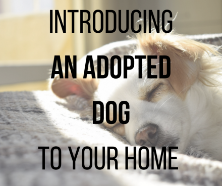 The best ways to introduce an adopted dog to your home
