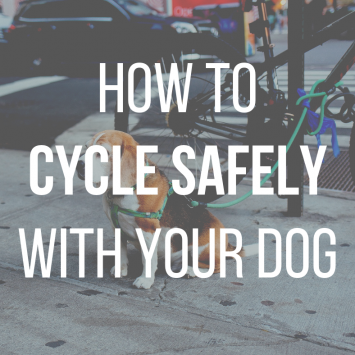A cyclist's best friend: how to cycle safely with your dog