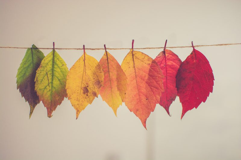 The best autumn crafts for children